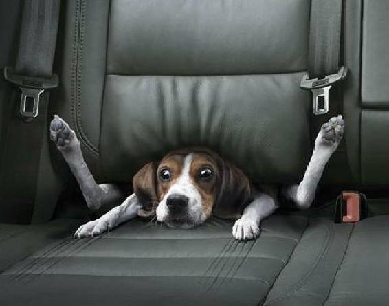 dog_fast_car.jpg