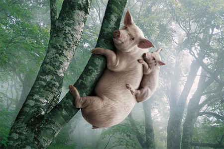 Animal Photo Manipulations