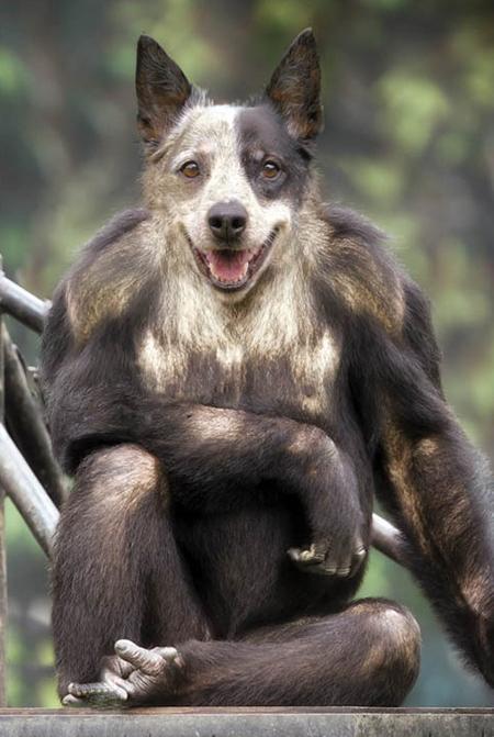 Animal Photo Manipulations