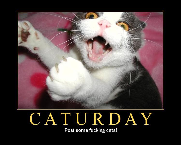 Caturday 01
